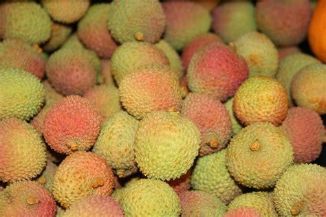 lychee fruit file lychee fruit jpg