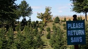 christmas tree farm central il chicagoland illinois tree farms choose and cut trees tree lots with pre