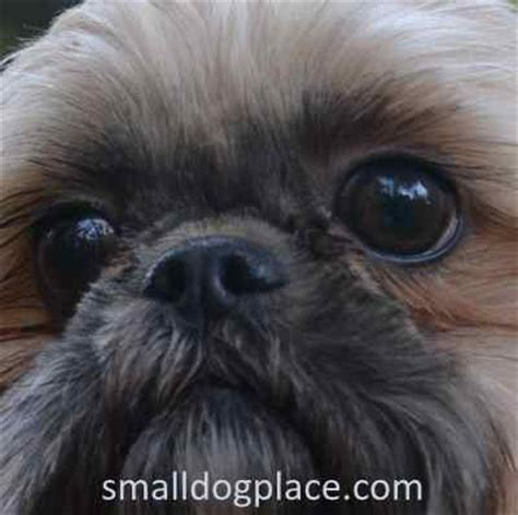 how many eyelids do dogs small health