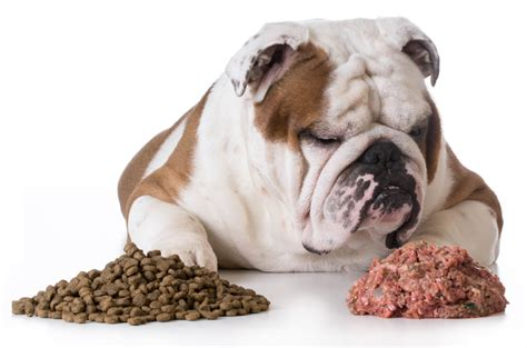 carbs in dogs breeds health behavior nutrition for dogs nation