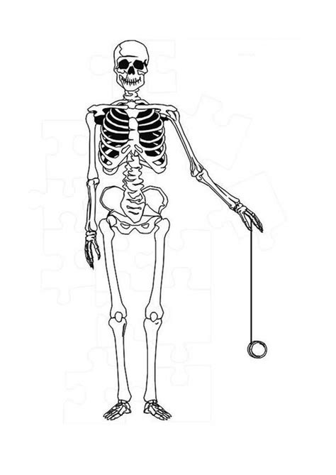 anatomy coloring pages skeleton human anatomy skeleton coloring pages human anatomy