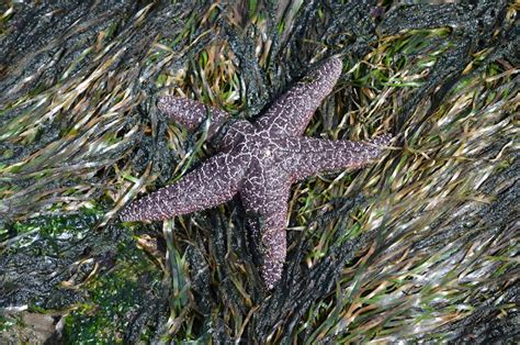 top 28 purple sea grass purple starfish stock photos purple starfish stock sea grass