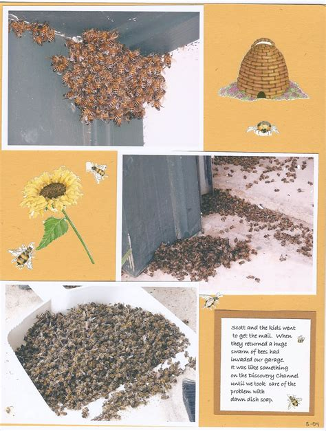How To Get Rid Of Bees In Backyard by How To Get Rid Of Bees In Backyard Modern Patio Furniture