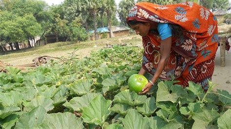 kitchen gardens  bring nutrition livelihood support