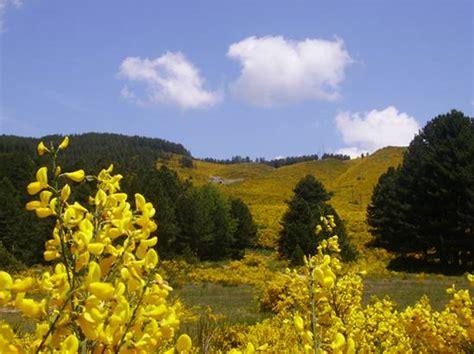 parco regionale co dei fiori parco nazionale della sila
