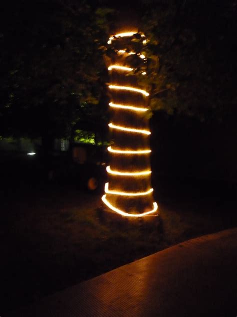 evergreen tree light wrap decorating the garden for lights garden to be home
