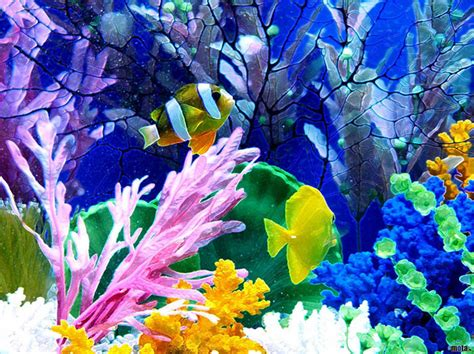 50 Best Aquarium Backgrounds Free Premium Templates Backgrounds For Fish Tanks Printable Free