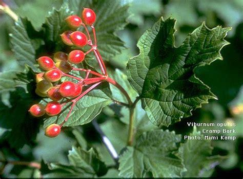 uyku bozukluu in ifal bitkiler aktarshop ifal bitkiler baharatlar hastalk