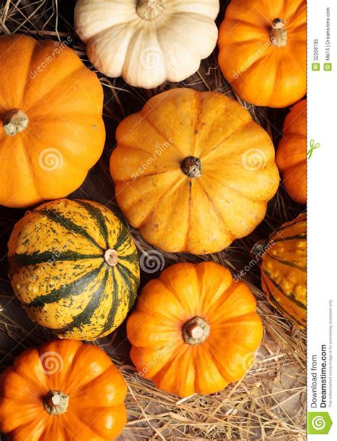 best pumpkins pumpkins royalty free stock photo image 32358785