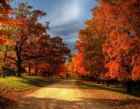 fall tree colors 30 most beautiful images of autumn leaves for you