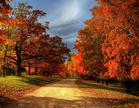 fall autumn 30 most beautiful images of autumn leaves for you