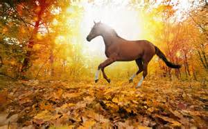 Horses in fall leaves forest wallpaper by lizziebennet19