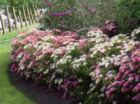 Petit Arbuste Fleuri by Id 233 E De Jardin Cr 233 Er Une Haie Fleurie Et Parfum 233 E