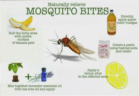 mosquito anti itch salves hurr etc