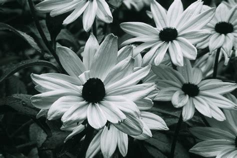 Flower Grey by Grey Flowers Tripleman Www Tripleman