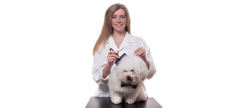 how much to tip groomer how much to tip a groomer