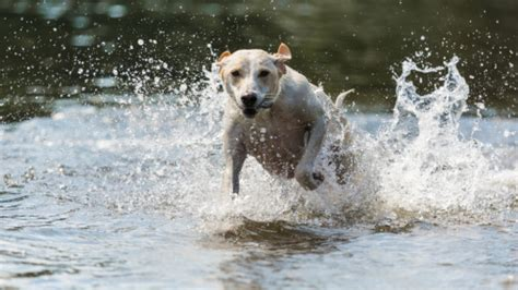 dogs that like water why do some dogs like water while others do not familypet
