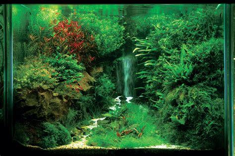 akuarium unik membuat air terjun  aquascape