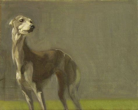 flood the greyhounds of pleasantville italian greyhound whippets and