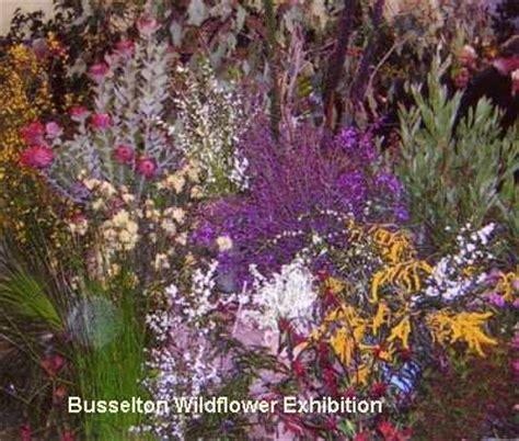 flowers in australian gardens growing annuals outdoors indoorstodaygarden ideas