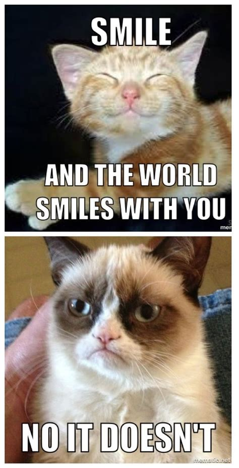 Make A Grumpy Cat Meme - how to make a grumpy cat meme 28 images kate mazur