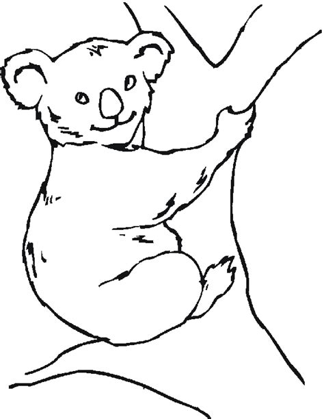 coloring page australian animals australian animals coloring pages coloring pages