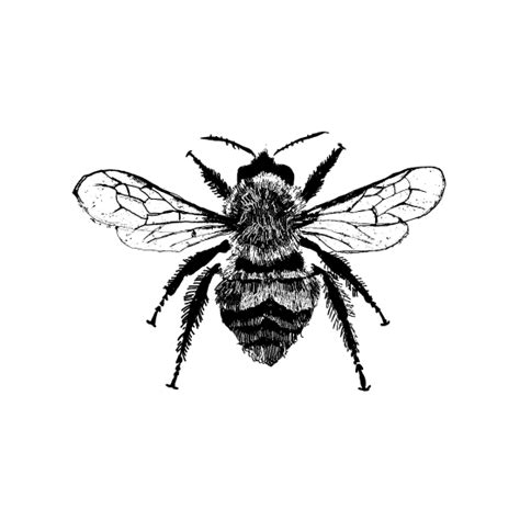 art prints botanical bee study no 179 at minted com