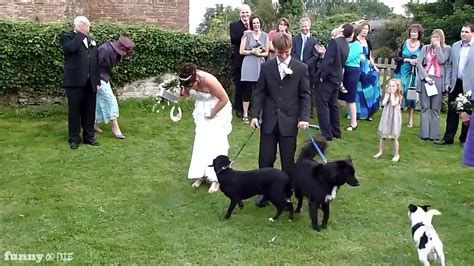dog pees in the house dog pees on bride