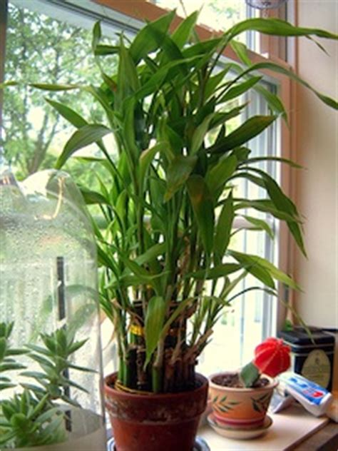photos plantes tropicales d interieur