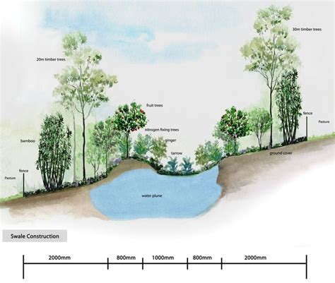 permaculture swale construction and illustration swales