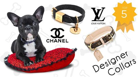 7 Dogs That Make The Best Accessories by Luxury Designer Collars And Accessories