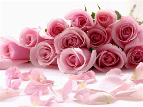 Wallpaper Bunga Warna Warni Bergerak | seikat bunga mawar pink kumpulan gambar gambar pilihan