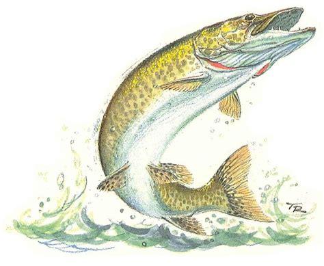 wisconsin state fish musky tatt s pinterest