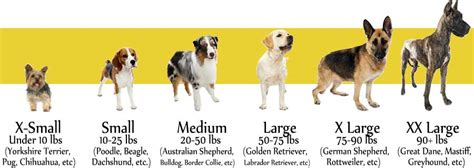 puppy size chart size chart breed chart comparison breed chart breeds do