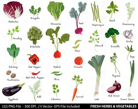 Vege Herbal Vegetable Digital Clipart Fresh Herbs Clipart Vegetable Clip