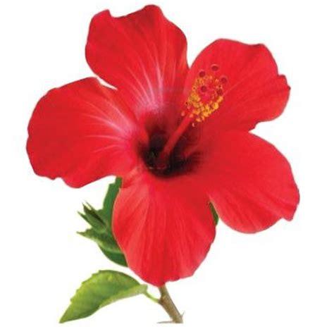 doodle nama rina gambar bunga png toko fd flashdisk flashdrive