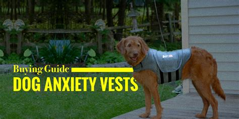 calming vest for dogs 5 best anxiety vests thundershirt akc diy buying guide