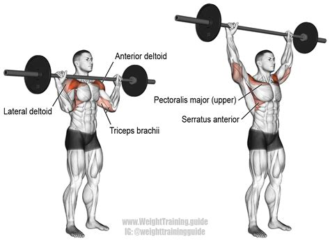 what does the bench press work barbell overhead press exercise guide and video weight