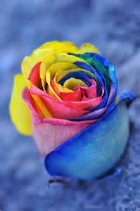 rainbow colored roses rainbow color inspiration ideas