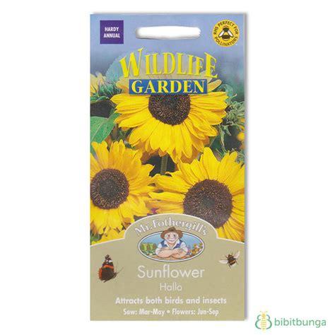 Benih Bunga Mr Fothergills Import Nigella In A Mist benih sunflower hallo 30 biji mr fothergills bibitbunga