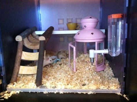 hamster house hamster house