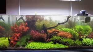 Planted Aquascape 120 Gallon Dutch Hybrid Planted Aquarium Youtube