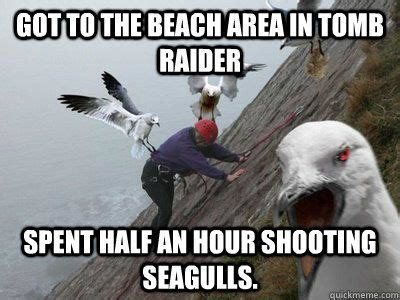 Finding Nemo Seagulls Meme - 38 best seagulls are cool seagullmania images on
