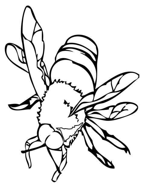 bee color free printable bee coloring pages for