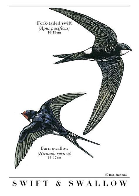 swift tattoo designs bird illustration and bird print of