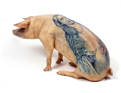 tattoo pig tattooed pigs wimdelvoye be