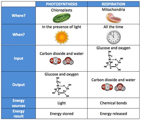 comparing photosynthesis and cellular respiration worksheet biology
