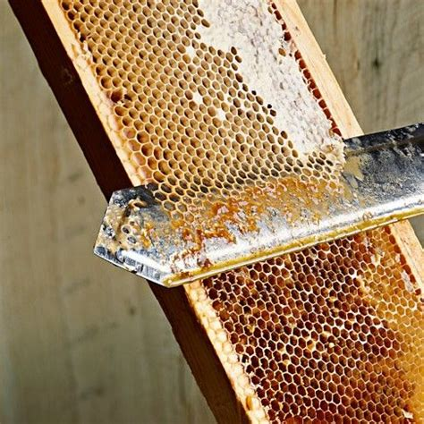 how to extract honey from a top bar hive honey extracting beekeeping http pinterest com pin 84583299224315324 repin