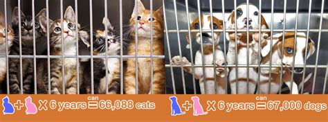cost of spaying a low cost spay neuter options paws shelter of central