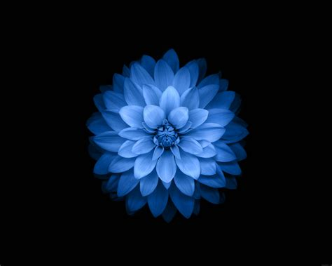 Wallpaper Blue Lotus | galaxy note 10 1 quot